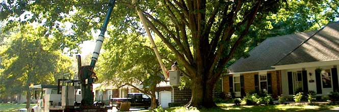 Town Branch Tree Experts - image